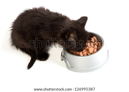 Cute black kitten eating cat food, isolated on  a white background