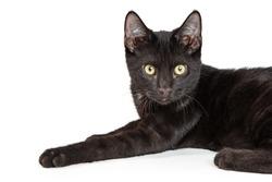 Cute black kitten lying down on white background looking forward
