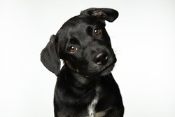 Cute black mixed breed puppy isolated on white background