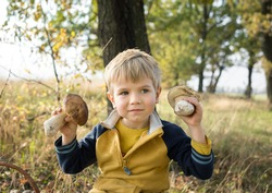 cute blond boy 4-5 years old holds two large porcini mushrooms near his face. picking autumn mushrooms. Hunting for forest mushrooms.