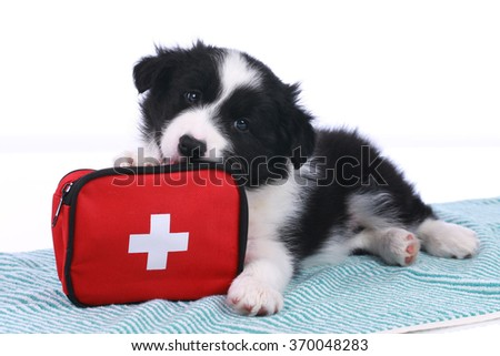 Cute border collie puppy with an emergency kit isolated