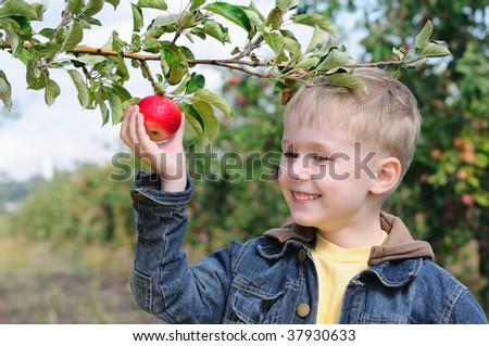 Cute boy in apple orchard