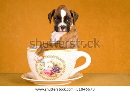 Cute brindle Boxer puppy in large coffee cup