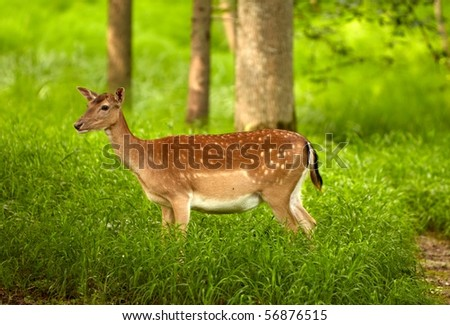 cute brown deer in the woods