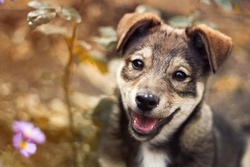 cute brown puppy smiling funny tongue hanging out