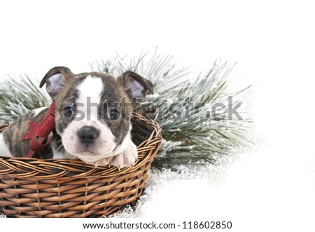 Cute bulldog mix puppy sitting in a basket with a red bow, with copy space.