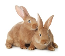 Cute bunnies isolated on white. Easter symbol