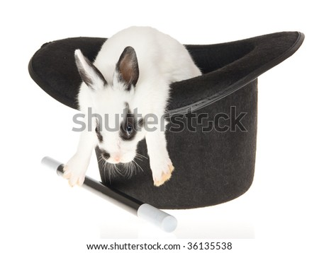 Cute bunny in top hat, on white background