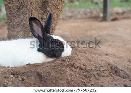 Cute bunny is lying under the tree, Little bunny, Cute bunny, Easter bunny.  #797607232