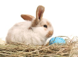 Cute bunny on hay with Easter egg against white background
