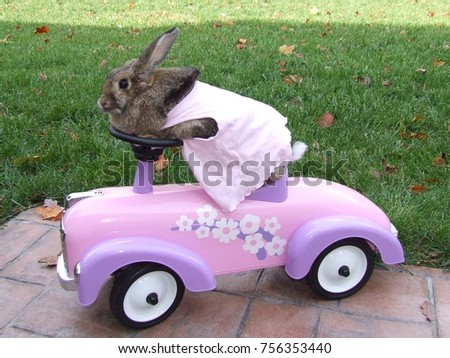 Cute Bunny on Pink Toy Car on Sidewalk with White Cotton Tail Hanging Out