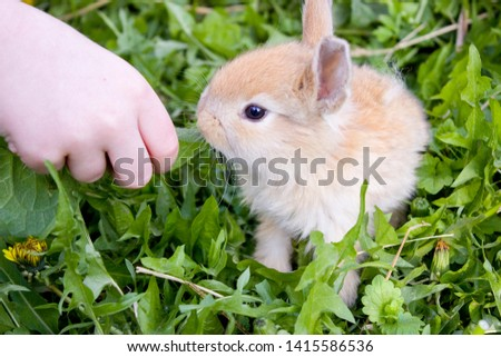 Cute bunny rabbit в траве кушает листик из рук ребенка. Cute bunny rabbit in colorful meadow beautiful spring scene Сток-фото ©
