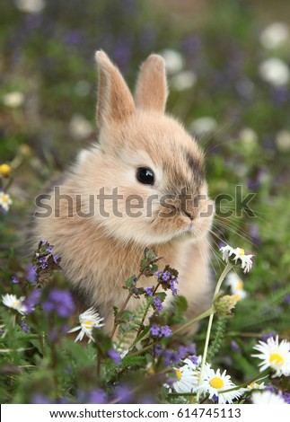 Stock Photo Cute bunny rabbit in colorful meadow