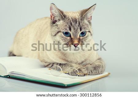 Cute business cat reading notebook (book)