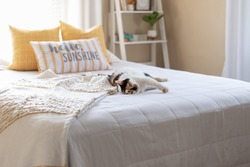 Cute calico cat on a bed in light and bright bedroom