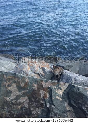 Cute cat among the stones. Stok fotoğraf ©