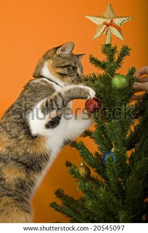 cute cat and christmas tree