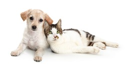 Cute cat and dog snuggling together while lying on a white background