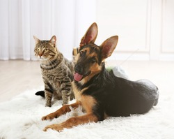 Free Cats And Dogs Stock Photos Stockvaultnet