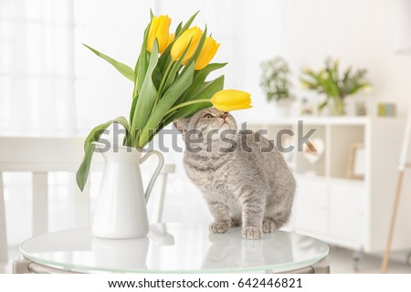 Cute cat and jug with flowers on glass table in light room #642446821