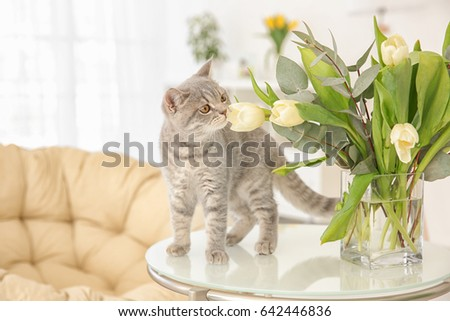 Cute cat and vase with flowers on table in light room #642446836