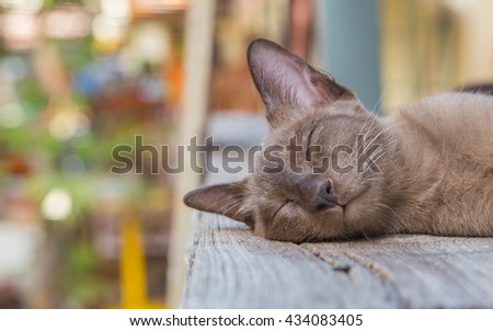 Cute cat, cat lying on the wooden floor in the background blurred close up playful cats, cats, cats, cats relaxing vacation.