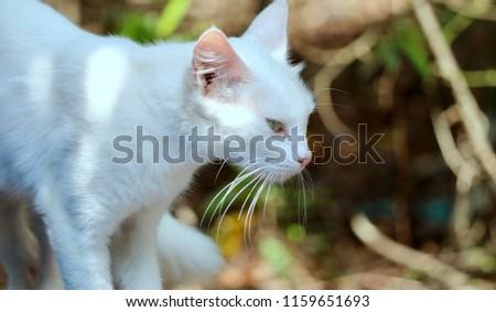 cute cat, cute baby,  #1159651693