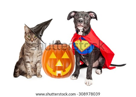 Cute cat dressed as a witch and dog wearing super hero costume for Halloween with a jack-o-lantern pumpkin