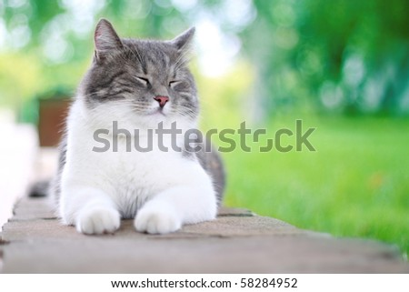 Cute cat enjoying his life outdoors.