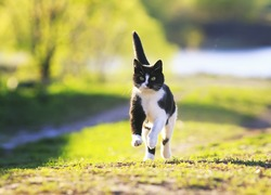 cute cat fun running on green Sunny meadow