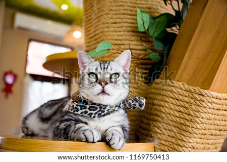 Cute cat in cat cafe. #1169750413