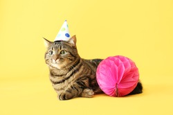 Cute cat in party hat on color background