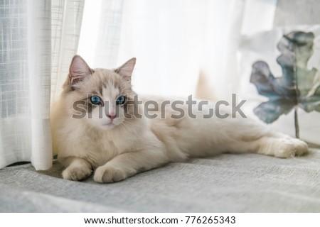 Cute cat, indoor shooting