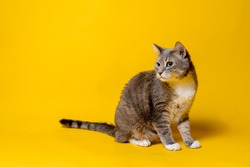 Cute cat is curiously looking away, sitting on a yellow background. Copy space.