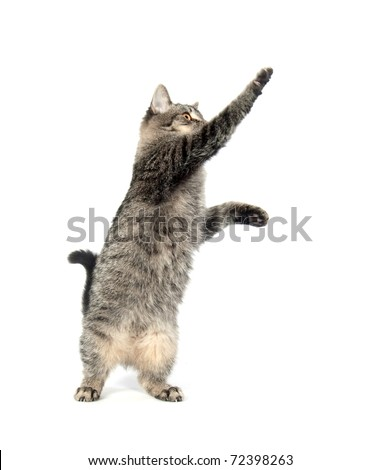 Cute cat jumping and playing on white background