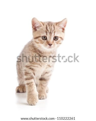 cute cat kitten on white background