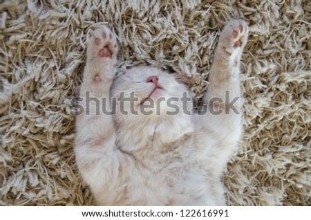 cute cat / kitten sleeping on carpet