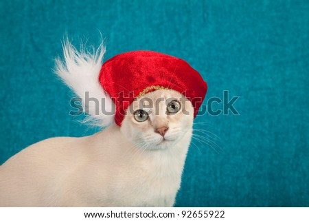 Cute cat kitten with red feather hat