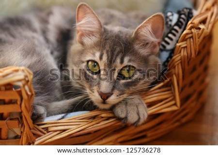 cute cat laying in basket
