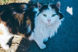 cute cat look at you