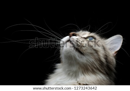 cute cat looking up portrait #1273243642