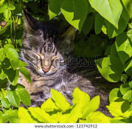 cute cat lying in the hedge and relaxes