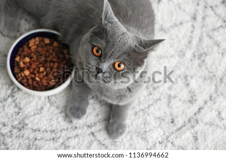 Cute cat lying near bowl with food on floor at home #1136994662