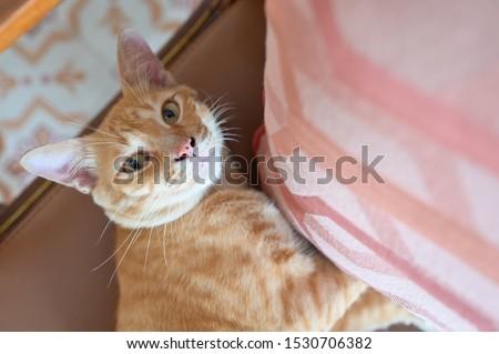 Cute cat lying on chair near a pillow  #1530706382