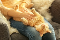 Cute cat lying on its owner's knees, close up view