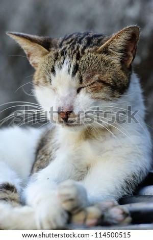 Cute cat napping