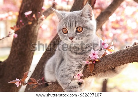 Cute cat on blossoming tree outdoors #632697107