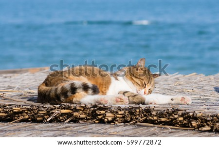 Cute cat on the Black Sea in Odessa in the spring #599772872