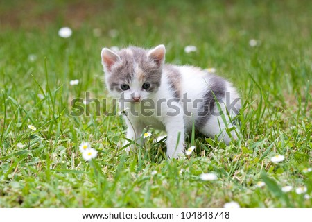 cute cat outdoor in nature