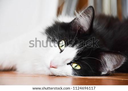 cute cat outside #1124696117
